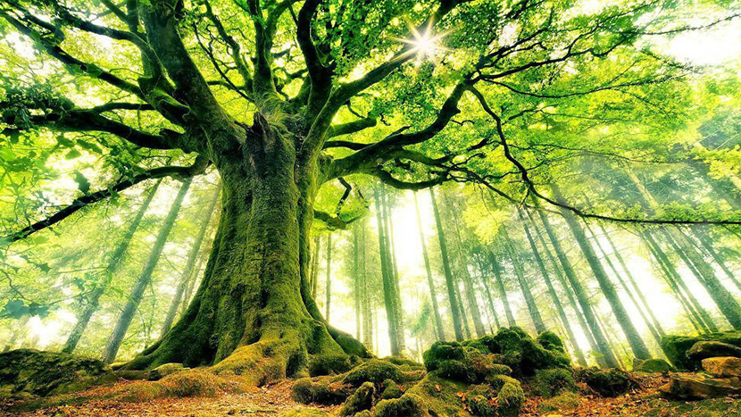 mother_earth_tree